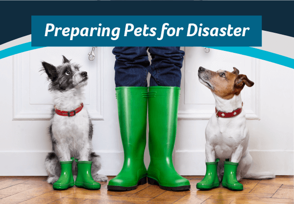 Preparing Pets for Disaster
