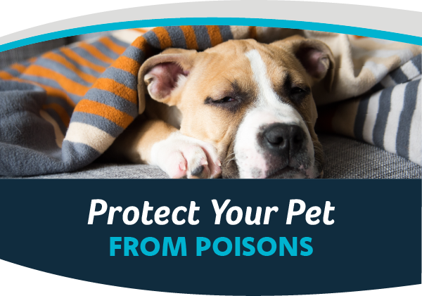 Protect Your Pets From Poisons