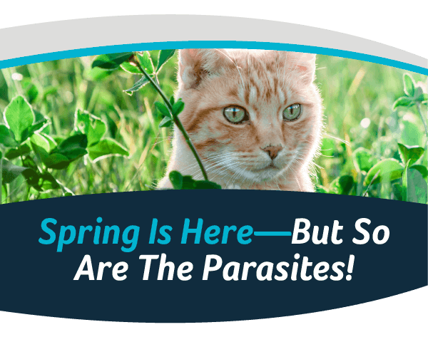 Spring Is Here, But So Are The Parasites!