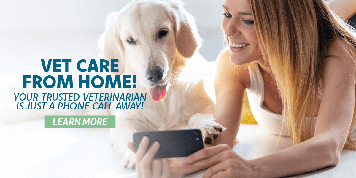 Vet Care from Home!