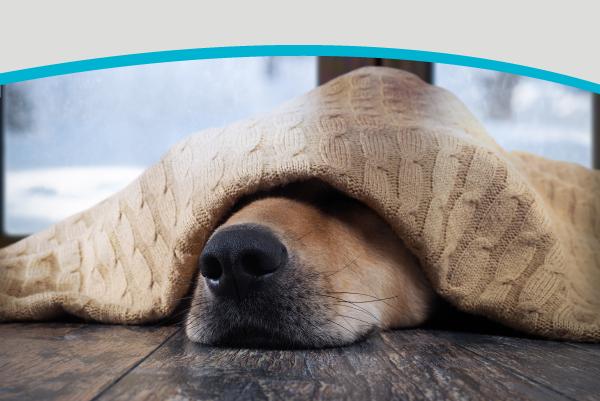 Bark, Bang, Boom! Keeping Your Pet Comfortable This Summer