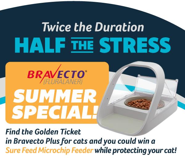 Summer Bravecto Special - Juanita Bay Veterinary Hospital