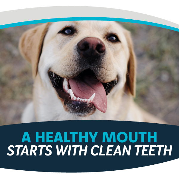 A Healthy Mouth Starts with Clean Teeth